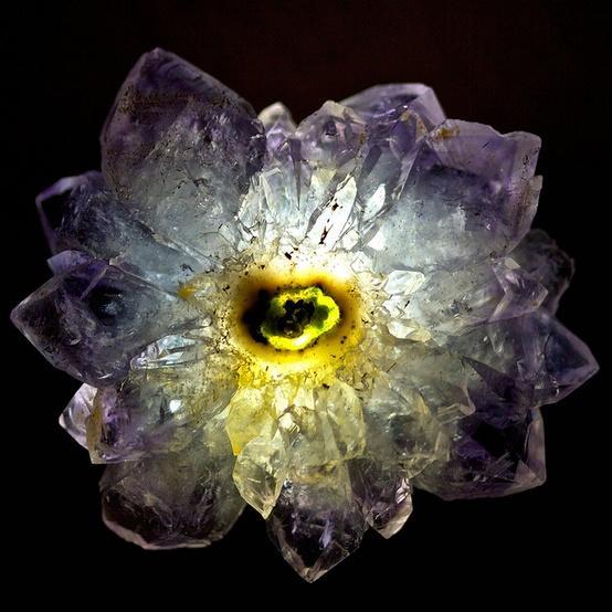 amethysten-flower